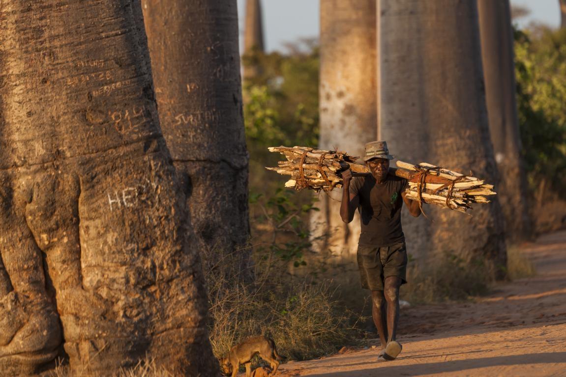 Die berühmte Baobab-Alle in Madagaskar