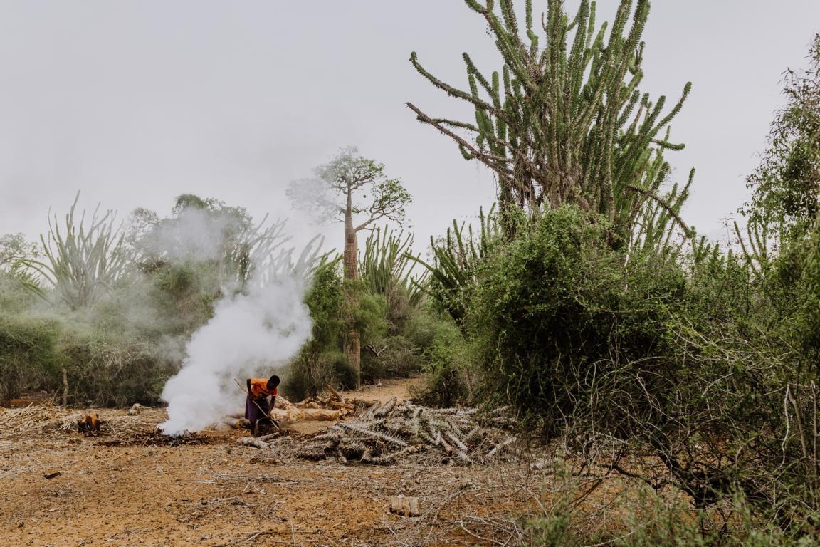 Der Dornwald in Itafy - Madagaskar-Tour