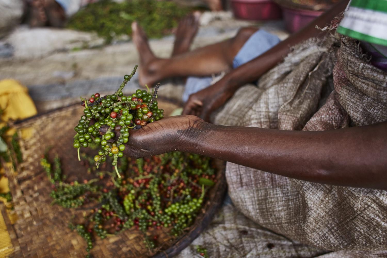 Gewürztour auf Madagaskar - Pfeffer