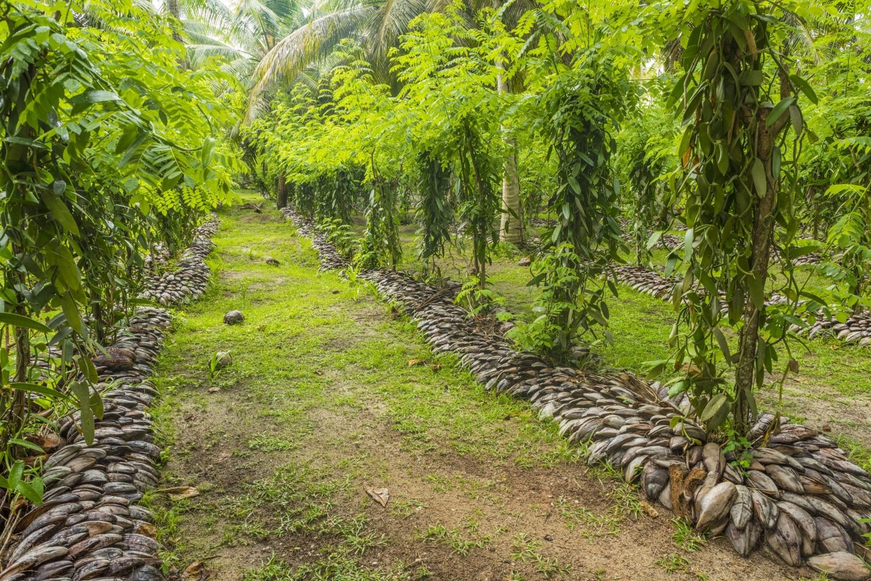 Gewürztour auf Madagaskar - Vanille-Plantagen