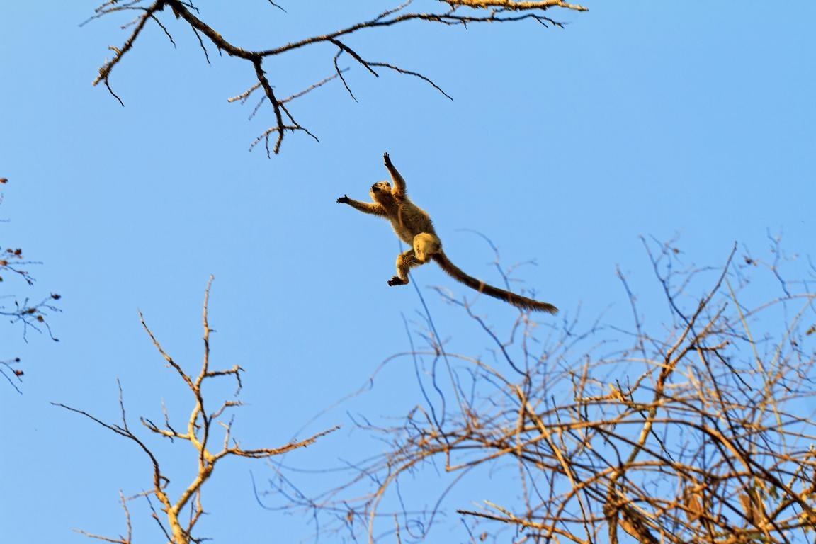 Lemur im Nationalpark Kirindy - Safari im Westen Madagaskars