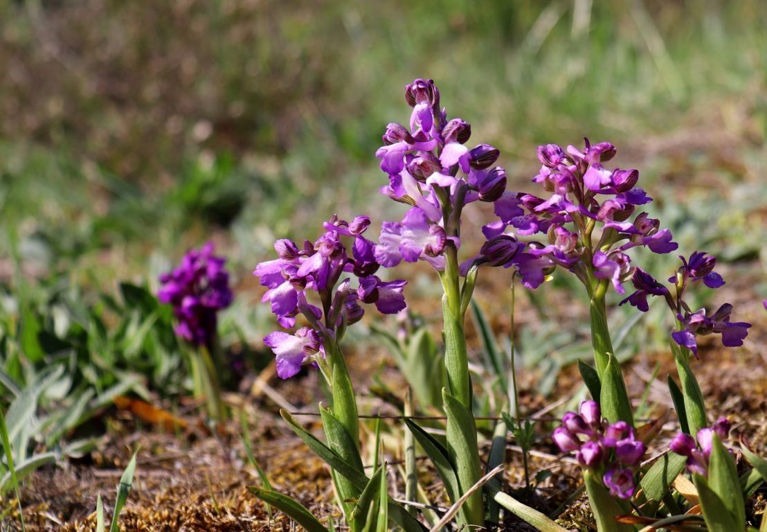 Prachtvolle Orchidee auf Madagaskars bei der Orchideen-Rundreise