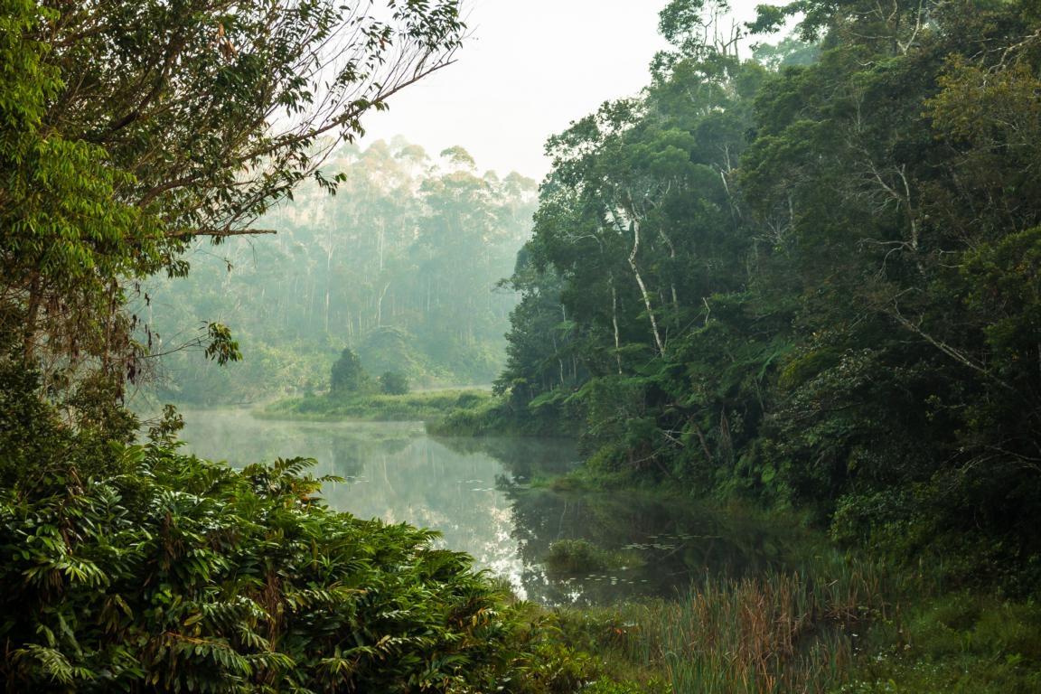 Der Küstenregenwald auf der Rundreise durch Madagaskar