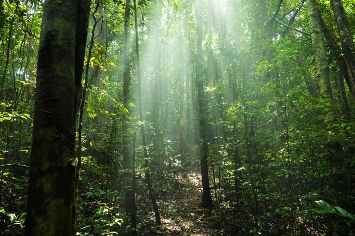 Küstenregenwald in den Primärwälder Madagaskars
